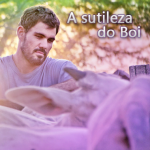 A sutileza do Boi